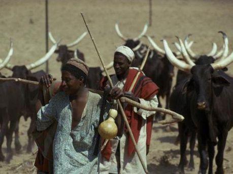 Скотоводы племени Фулани