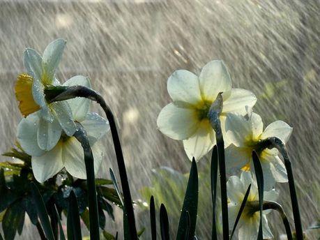 На юге дожди