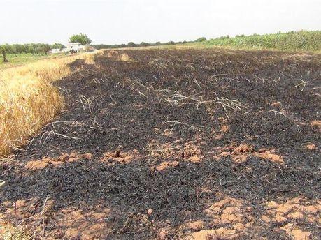Выгоревшие поле