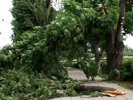 Сильный ветер повалил дерево