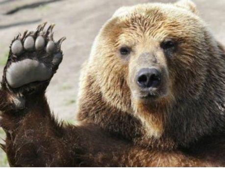 Картинки по запросу ведмеді в україні