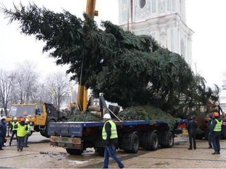 В Киеве установили главную елку (Фото)