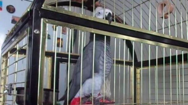 Папугу навчили співати пісню про Путіна