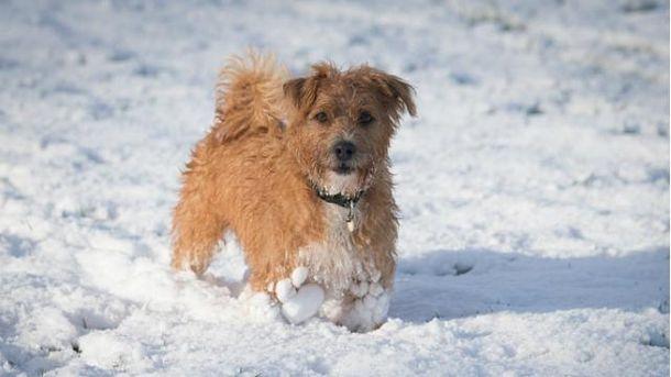 Сьогодні в Україні мокрий сніг