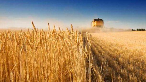 Павленко розповів, яку частку експорту торік склала агропродукція