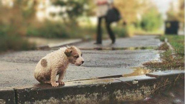Бездомная собака