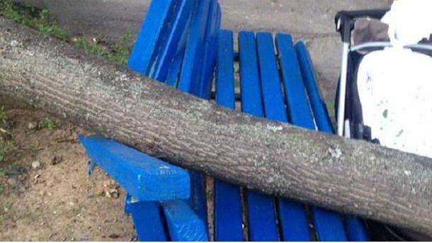 На жінку з дитиною впало дерево