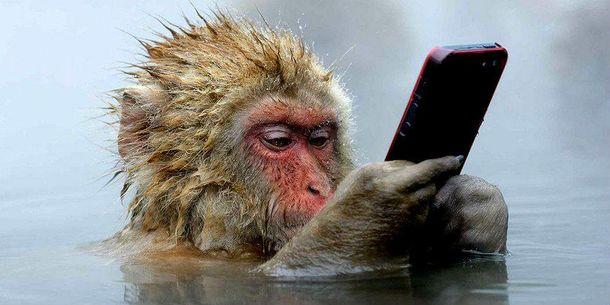 Мавпа робить селфі