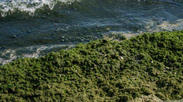 Зелень в Одессе