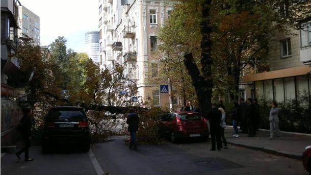 Дерево упало в центре Киева