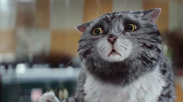 Кішка Мог