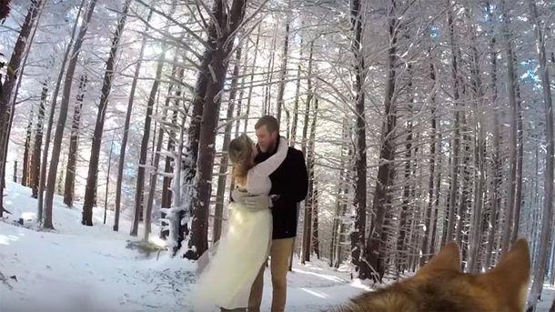 Собака сняла свадебное видео