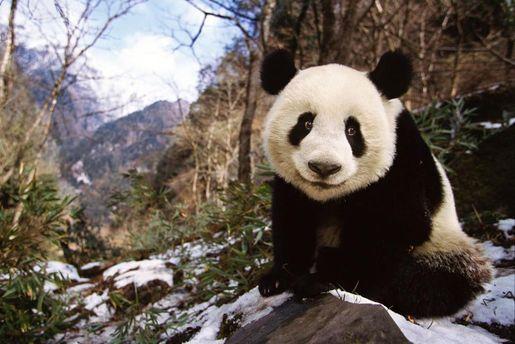 Топ-5 найяскравіших фотогалерей 2015 року від National Geographic
