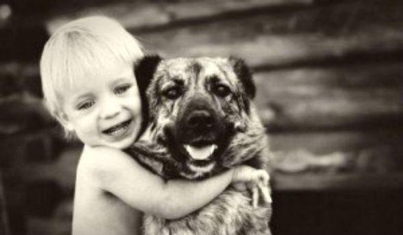 Собаки розпізнають емоції людей