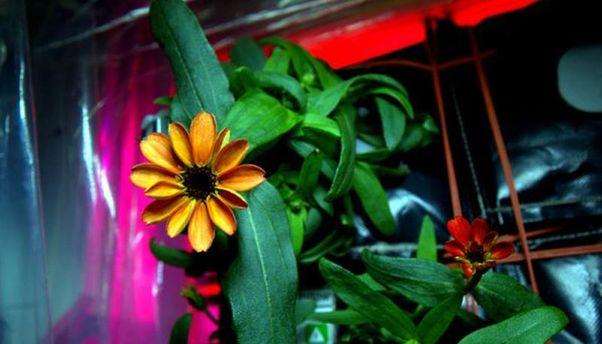 Цветок на МКС