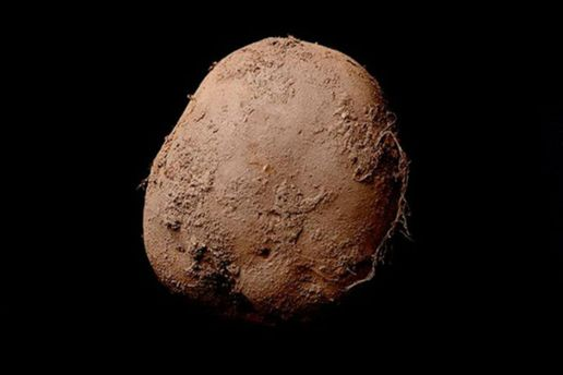 Фото картофеля