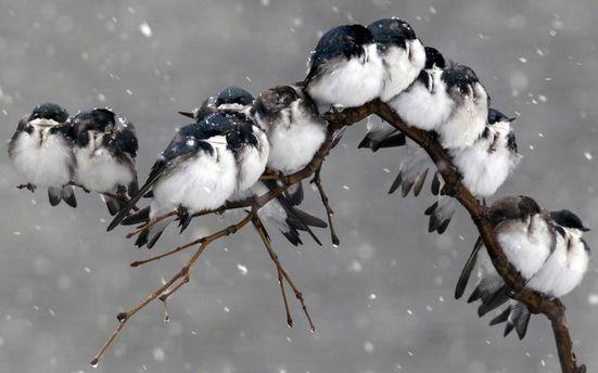 Птахи взимку