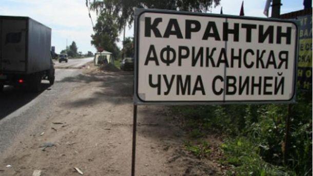 В Крыму вспышка африканской чумы свиней