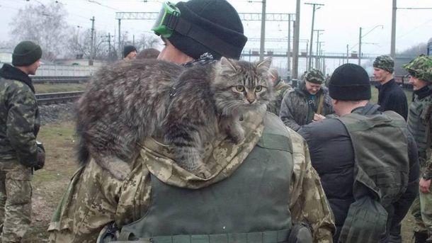 Боєць з котом