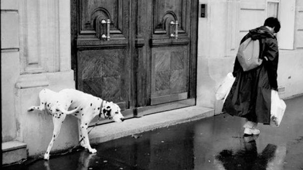 Что надо знать владельцам собак
