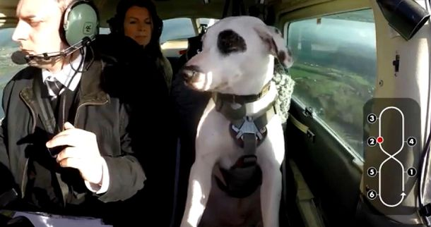 Собака-пілот