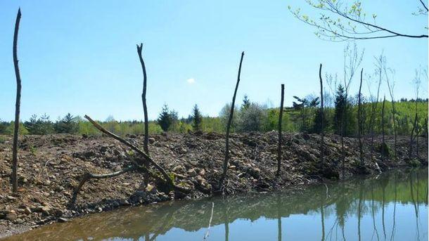 Нефтяники уничтожили лес
