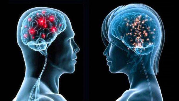 Мозг людей