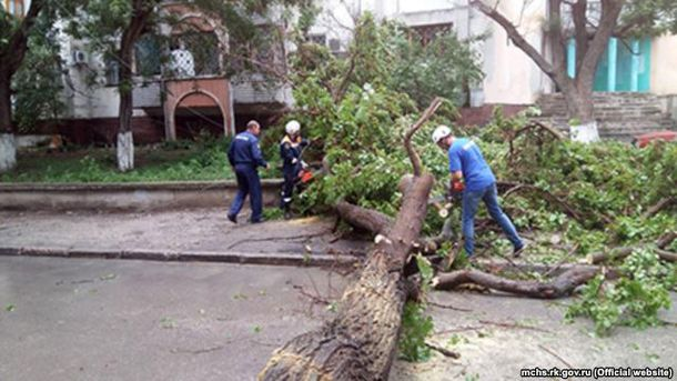 Дерево впало на дорогу у Криму