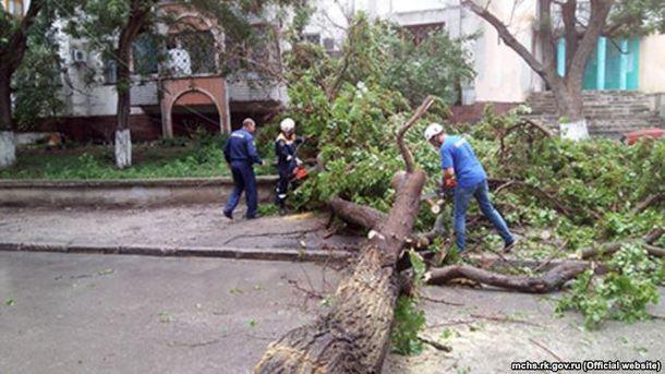 Дерево упало на дорогу в Крыму