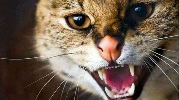 Ветеренари запевнили, що у кота сказу не було