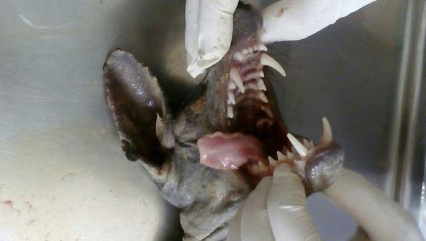 Фото странного существа, которое зафиксировали на Буковине