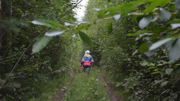 Женщина пошла в лес и не вернулась (иллюстрация)