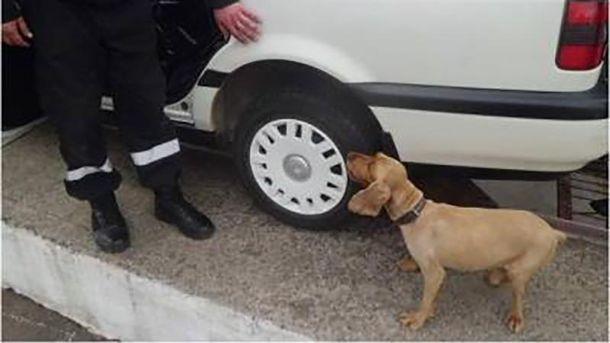 Собака Теро