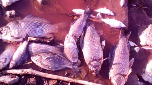 Річка Стугна почервоніла, а риба померла