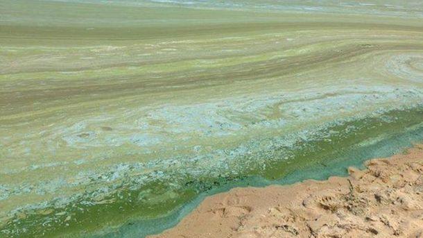 Київське море покрилося пліснявою