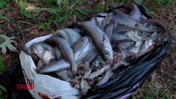 Червива риба