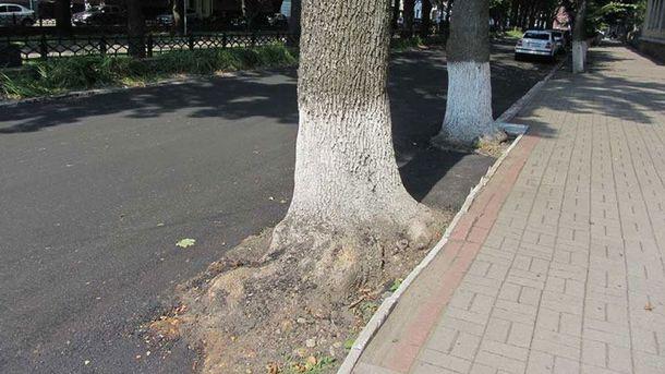 Дерева опинились у