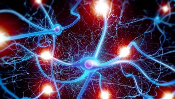 Нейрони