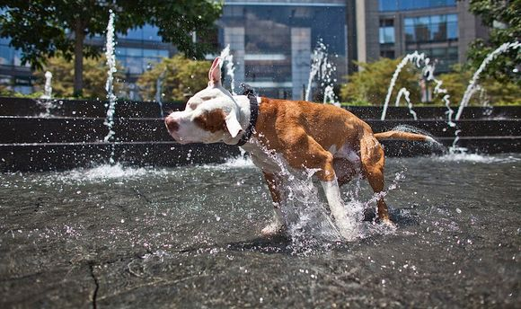 Лето 2016-го бьет температурные рекорды
