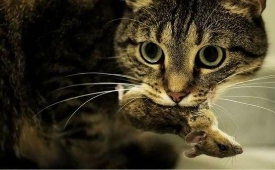 Ученые заявили, что коты виновны в вымирании десятков видов животных