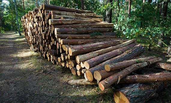 Вирубка лісу