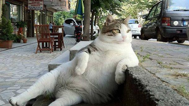 УСтамбулі встановили пам'ятник задумливому коту Томбілі