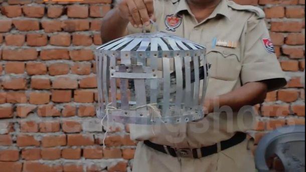 Голубя задержали в Индии