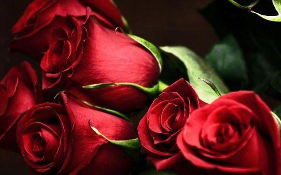 Розы для Путина