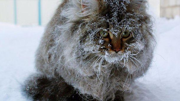 Вначале недели вУкраине будет холодно, нобез осадков