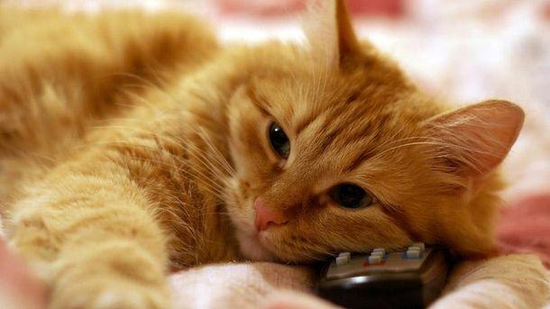 Кіт зажадав телевізійної слави