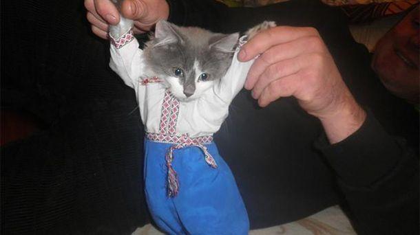 Кіт-патріот є й на передовій (ілюстрація)