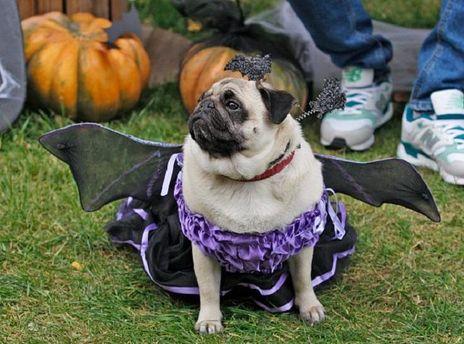 Хеллоуинский монстр