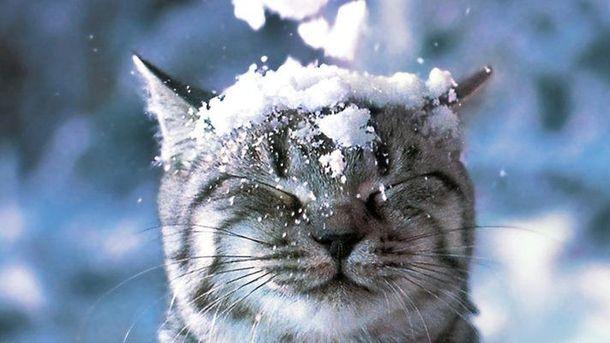 Падає сніг