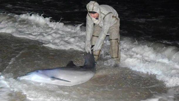 Спасение дельфина
